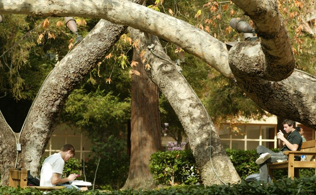 Two male students studying near large trees in courtyard