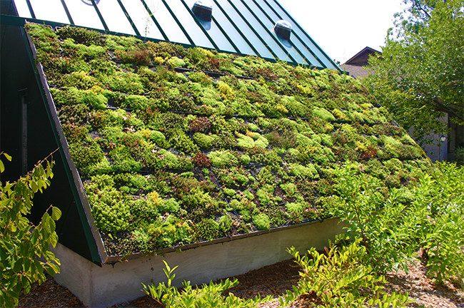 rooftop garden with vertical features