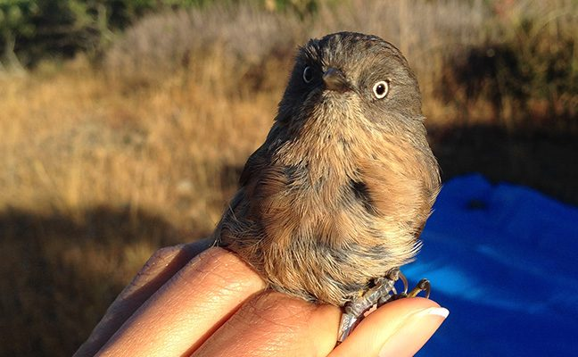 DNA gives clues about breeding grounds, migration patterns and wintering areas.